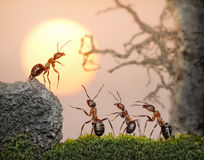 Team of ants, council, collective decision in work stock photography