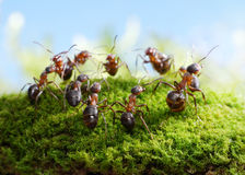 Team of ants, dance of hunters Royalty Free Stock Photography