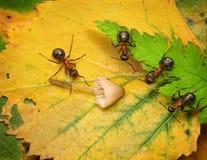 Team of ants examine mushroom. Team of forest ants examine mushroom stock images