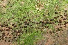Team of ants with food Royalty Free Stock Photos