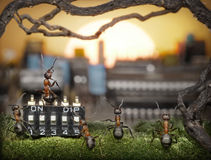 Team of ants managing sunrise, fantasy Stock Photography