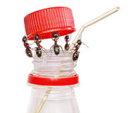 Team of ants opening bottle, teamwork , isolated Royalty Free Stock Images
