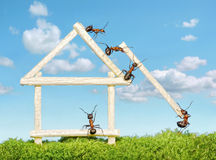 Team of ants work constructing house, teamwork