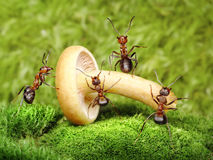 Team of ants work with mushroom, teamwork