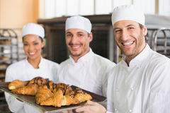 Team of bakers smiling at camera with trays of croissants Royalty Free Stock Photos