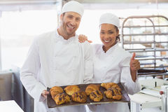Team of bakers smiling at camera with trays of croissants Royalty Free Stock Images