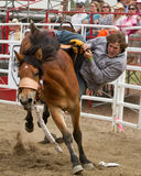Team Bronc-Reiten - PRCA Schwestern, Oregon-Rodeo 2011 Stockbilder