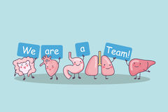 We are a team. Cute cartoon intestine,heart,stomach,lung and liver, great for health care concept Royalty Free Stock Photo