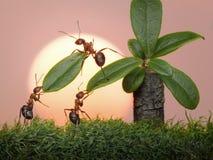 Team der Ameisen arbeiten mit Blättern der Palme, Teamwork Stockfotos