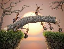 Team der Ameisen, die Brücke, Teamwork konstruieren Lizenzfreies Stockfoto