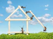 Team der Ameisen, die hölzernes Haus konstruieren lizenzfreies stockfoto