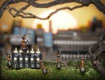 Team der Ameisen, die Sonnenaufgang, Fantasie handhaben Stockfotografie
