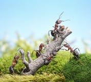 Team der Ameisen und des verwitterten Baums, Teamwork-Konzept Lizenzfreie Stockfotos