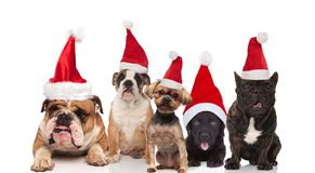 Team of five cute santa dogs of different breeds. Sitting and lying on white background stock photos