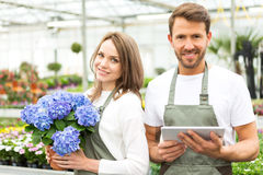 Team of florist working together at the plants nursery Royalty Free Stock Photo