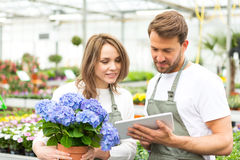 Team of florist working together at the plants nursery Royalty Free Stock Photos