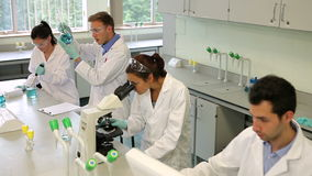 Team of focused science students working together in the lab stock video