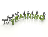 Team forming Training word Royalty Free Stock Photo