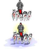 Team of four sports sled dogs with dog-driver. Two options sleds sled dogs