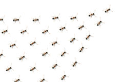 Team. The team of a group of ants Royalty Free Stock Photography