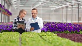 Team het landbouwarbeider spreken omringd door rij verse organische installaties bij serre stock video