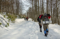 Team of hikers in winter forest. A snowy path in forest and a small group of hikers who are passing through Royalty Free Stock Images