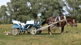 Team of horses and cart stock footage
