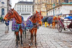 Team of horses and coach at Stephansplatz in Vienna. Vienna, Austria - January 8, 2014: Team of horses and coach at St Stephen Cathedral and Stephansplatz in Royalty Free Stock Photography