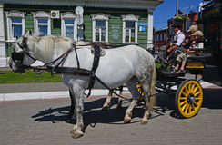 The  team of horses with coachman and two children in small russian city Kolomna Stock Photography