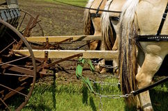Team of horses hooked up. A team of beautiful horses are hitched to a drill seeder as the planting will occur in the nearby field Royalty Free Stock Image