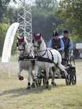 Team of 2 horses Marathon event Royalty Free Stock Image