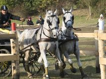 Team of 2 horses Marathon event Royalty Free Stock Images
