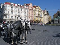 A team of horses at the Old town Square in Prague. Stock Photography