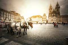 Team of horses in Prague. Team of horses in Old Town with Tyn Church, Prague Stock Photos