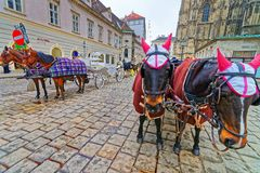Team of horses and their coach near Stephansplatz Vienna. Team of horses and their coach near St Stephen Cathedral and Stephansplatz, Vienna, Austria Royalty Free Stock Photography