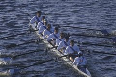 Team of Male Rowers, Royalty Free Stock Images