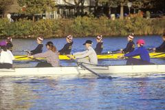 Team of Male Rowers Royalty Free Stock Photos