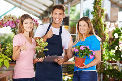 Team in nursery shop holding thumbs up. Happy team of gardeners in a nursery shop holding thumbs up royalty free stock photos