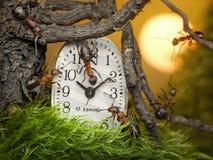 Team Of Ants Adjusting Time On Clock, Teamwork Stock Image