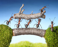 Free Team Of Ants Carry Log On Bridge, Teamwork Royalty Free Stock Photography - 26376567