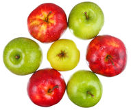 Free Team Of Seven Ripe Apples On White Background Stock Photo - 60729190