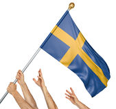 Team of peoples hands raising the Sweden national flag. 3D rendering isolated on white background Royalty Free Stock Photo