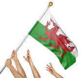 Team of peoples hands raising the Wales national flag. 3D rendering isolated on white background Stock Images