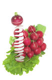 Team of radishes rushes into salad Royalty Free Stock Images