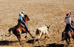 Team Roping. Competition at a rodeo Royalty Free Stock Photography