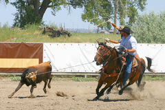 Team Roping. Two cowboys on horses roping a young calf at a rodeo event royalty free stock images