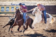 Team Roping Competition Fotografia de Stock Royalty Free