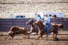 Team Roping Competition Stockbilder