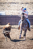 Team Roping Competition Fotos de Stock