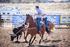 Team Roping Competition Fotos de Stock Royalty Free